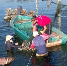 בריכות הדיג של להבות הבשן